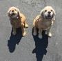 Angie & Maxie -