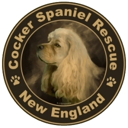Cocker Spaniel Rescue Of New England, Inc  — THE RIGHT DOG