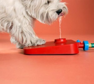 pawcet-drinking-fountain-for-your-dog