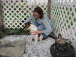 1/2 Hour Animal Massage or Reiki at Rub My Belly Massage