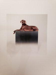 William Wegman, signed, numbered and framed print http://www.wegmanworld.com/
