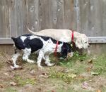 Lulu and Sammy