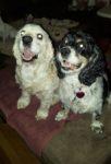 Sammy & Lulu 1a